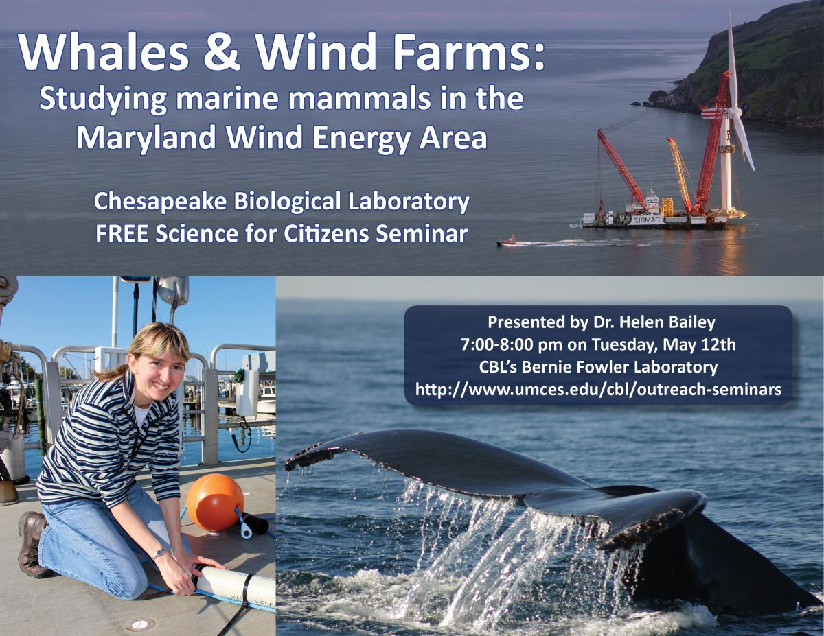 Poster Promoting Whales & Wind Farms seminar