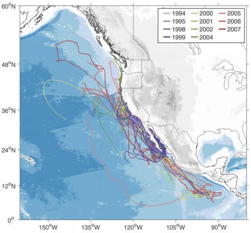 Blue whale habitat map - photo#26