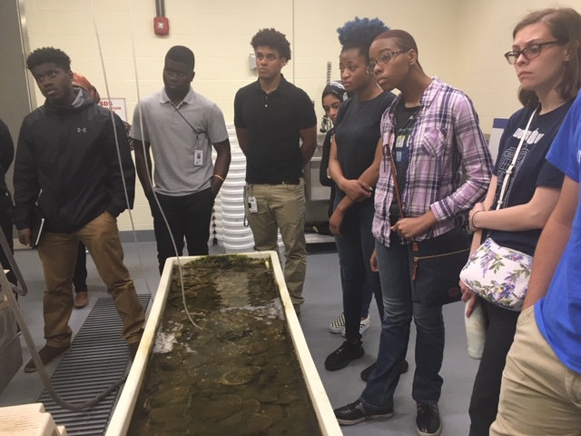 Oysters in a tank with students looking on