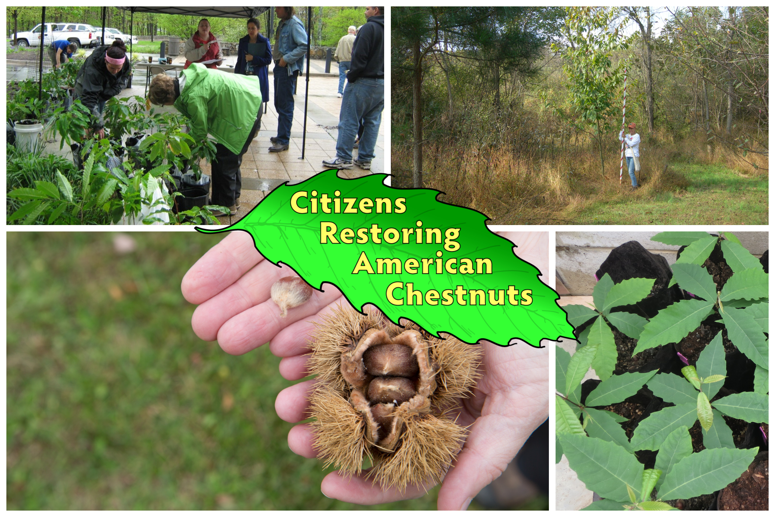 Collage of of chestnut pictures with project logo
