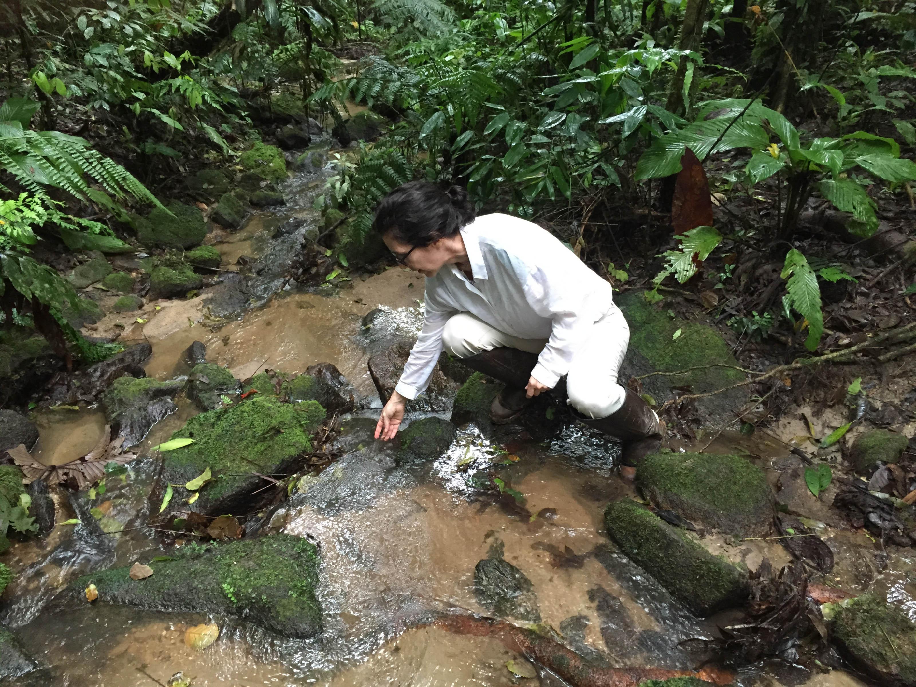 solange in field in brazil