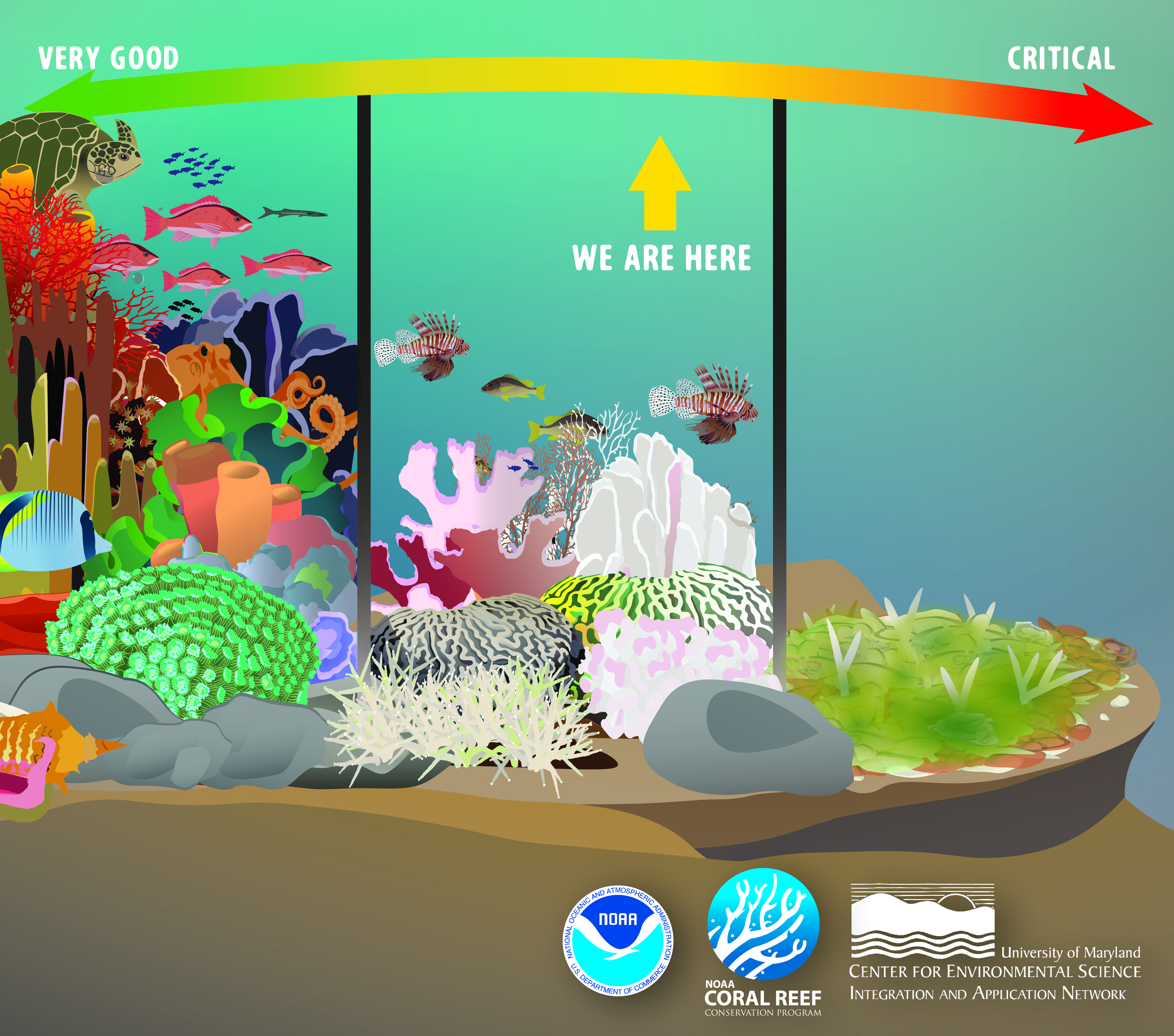 "Alt text: Infographic of coral reef health continuum from ""Very Good"" to ""Critical,"" separated into three stages of coral health, that indicates U.S. reefs are currently in fair condition."
