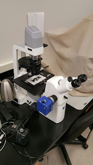 Zeiss AxioVert A1 Inverted Microscope