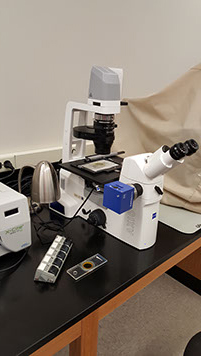 Zeiss AxioImager 2  Fluorescent Microscope