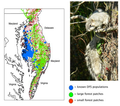 Range of Delmarva Fox Squirrel