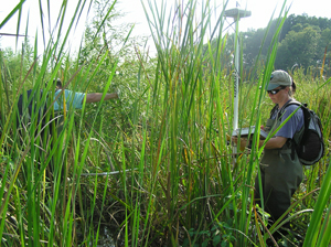 Dr. Engelhardt sampling in Dyke Marsh