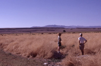 Colleagues, Sara Manning and John Mustard, standing in a field of the invasive annual, Bassia hyssopifolia. Often, decreases in native vegetation were followed by an increase in exotic species when the drought ended.