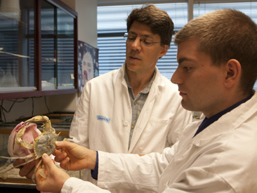 Dr. Eric Schott (left) and an IMET student examining a blue crab in his IMET laboratory.