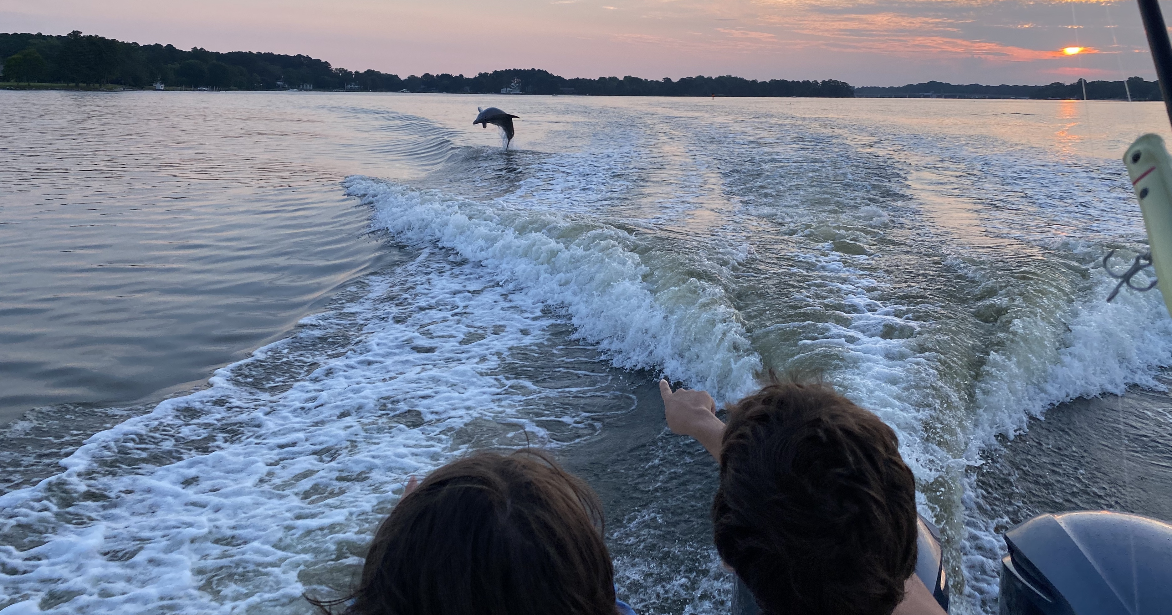 Citizens on the Chesapeake Bay Watching Dolphins