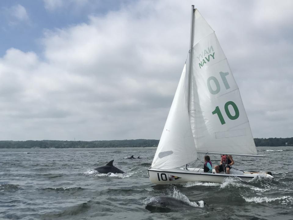 Dolphins in Chesapeake Bay by Carolyn Wilson