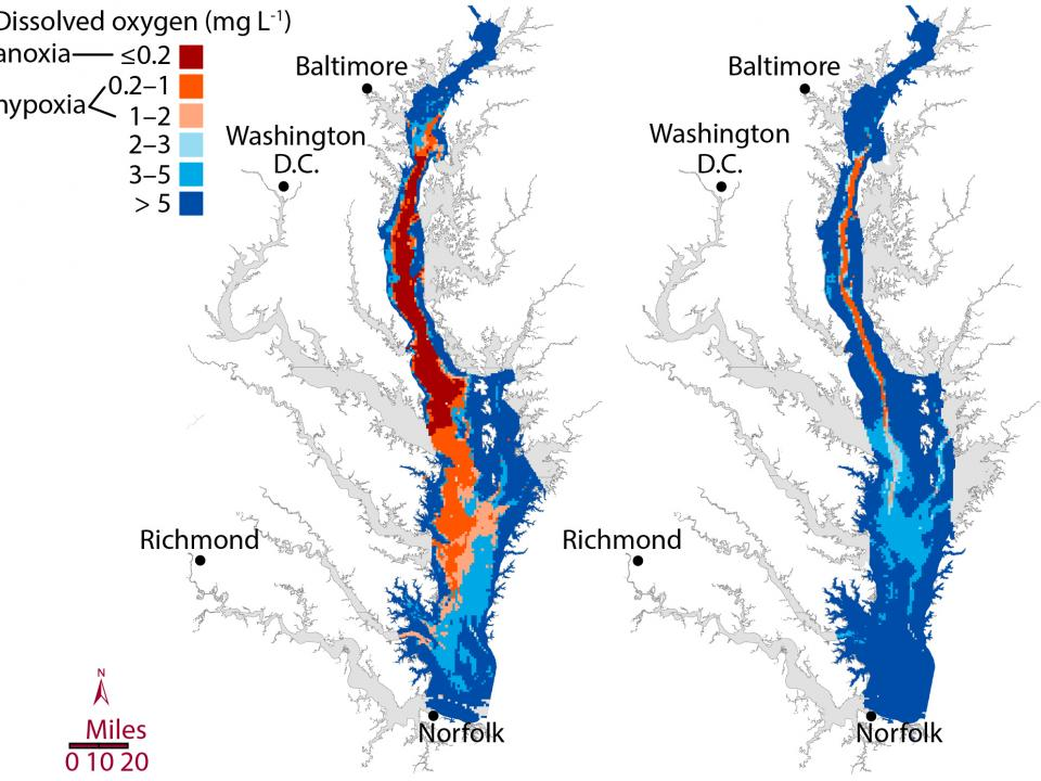 larger summer �dead zone� predicted for chesapeake bay