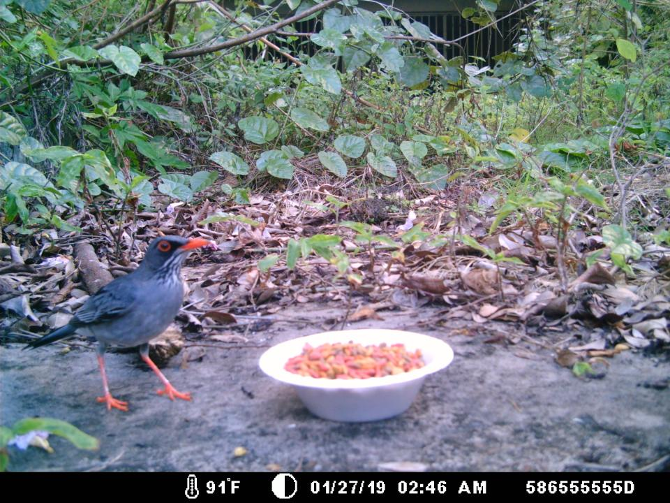 Bird captured on trail cam