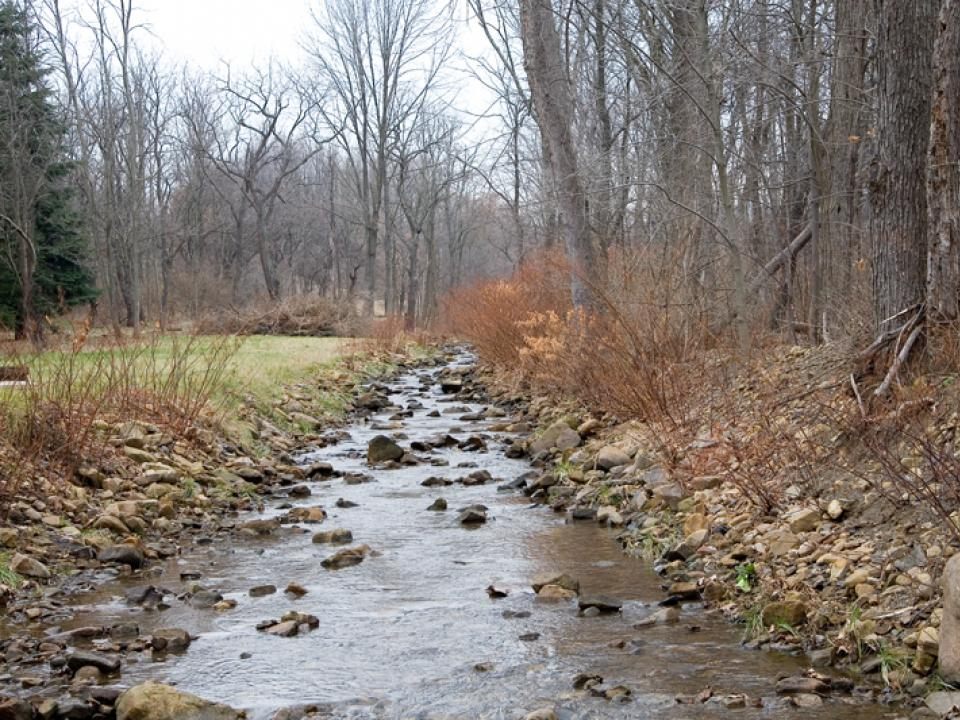 stream with forest and lawn