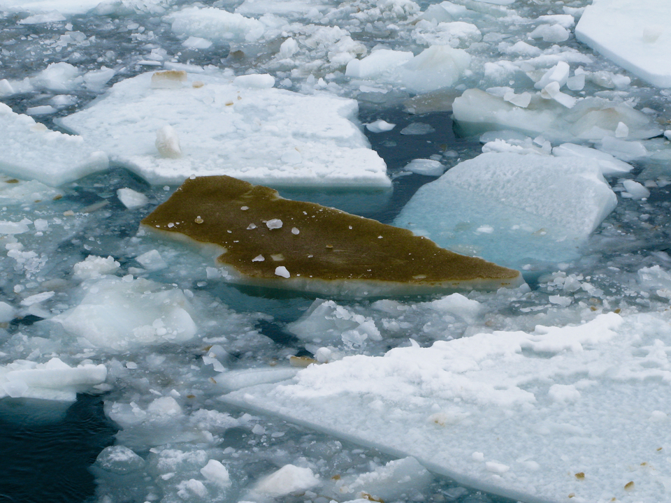 Sea Ice Algae
