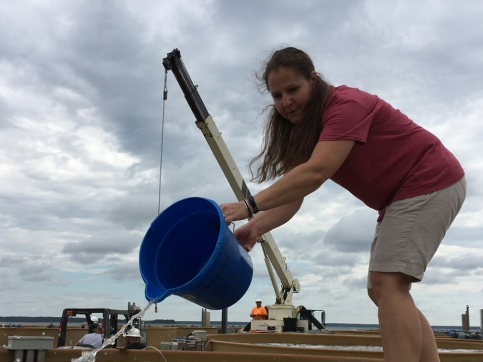 Stephanie Tobash seeds oysters in tanks at the Horn Point Laboratory's oyster pier.