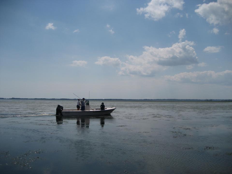 Researchers do fieldwork in the Bay.