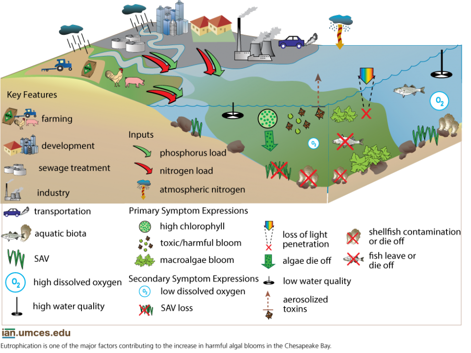 "Conceptual Diagram illustrating the process that creates low oxygen levels in an estuary. Diagram from ""Global Warming and the Free State"""