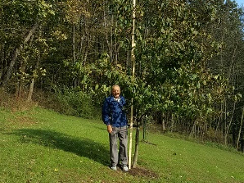 Citizens Restoring American Chestnuts citizen scientist Joe Kroll with his 8 ft tall American chestnut tree