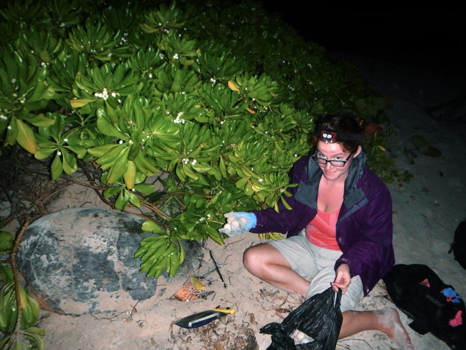 Relocating a turtle nest