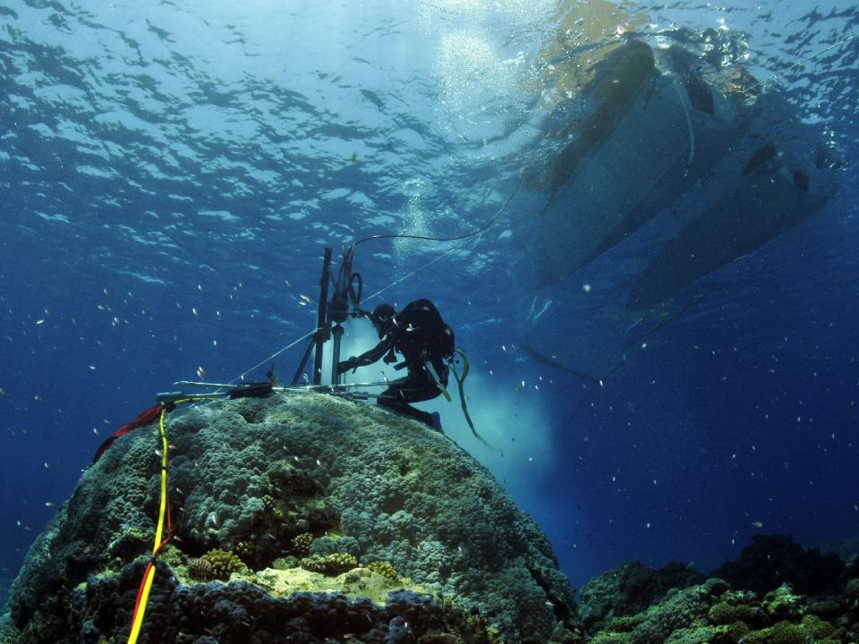 A scuba diver takes a core sample from coral on the bottom of the ocean.