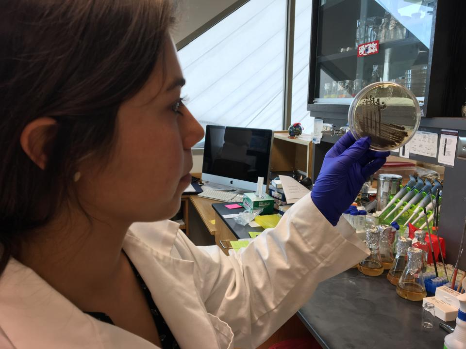 Graduate student Daniela Tizabi holding up a petri dish in the lab