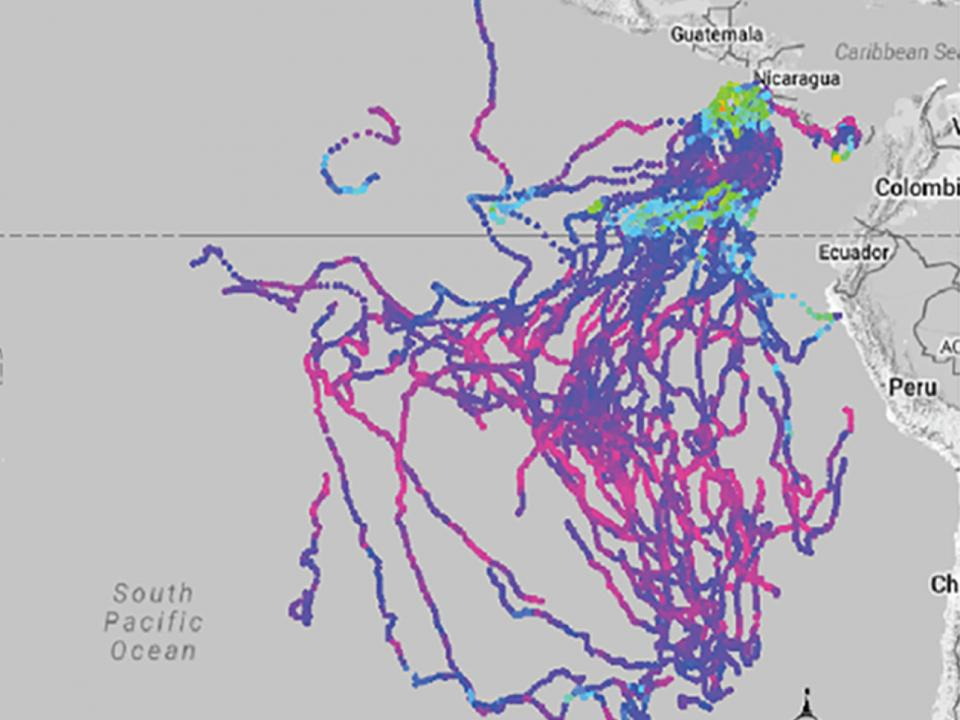 Leatherback turtle tracking map off coast of South and Central America