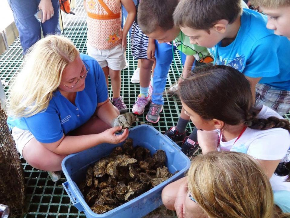 Brzezinski environmental education