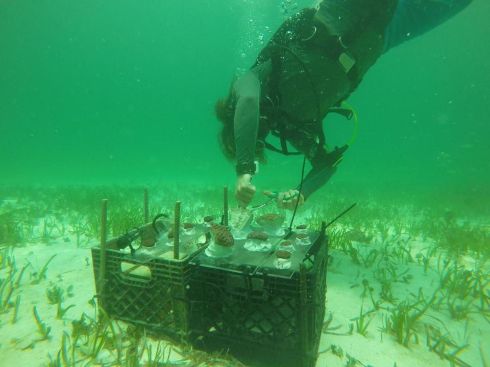 Understanding Seawater Chemistry Improves Coral Climate Predictions