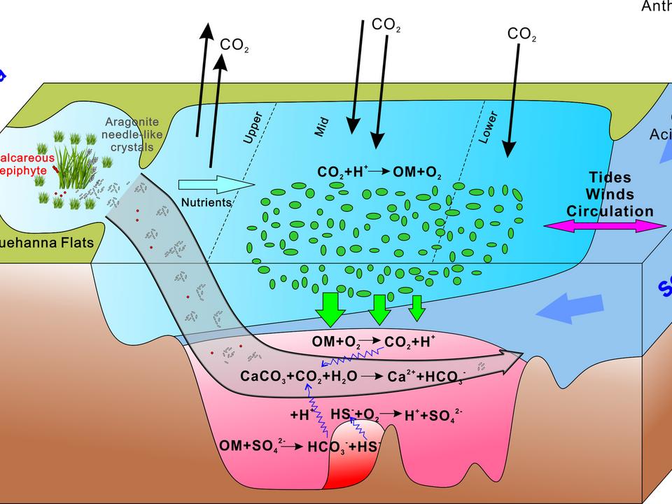 Estuarine acidification
