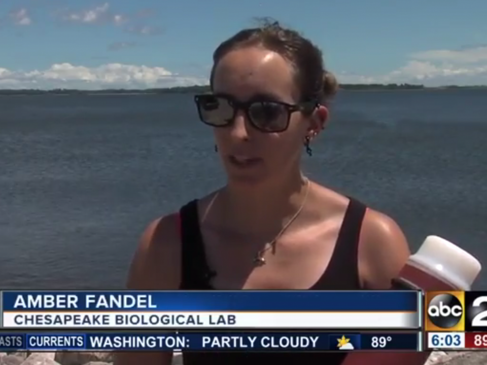 amber fandel of cbl talks dolphinwatch on abc2