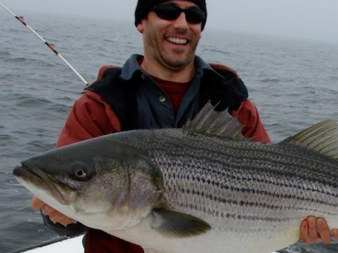 UMCES' Chesapeake Biological Laboratory alumnus Adam Peer holds a striped bass (rockfish).