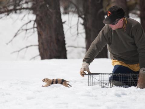 John Hoogland releases a prairie dog. Photo by Elaine Miller Bond