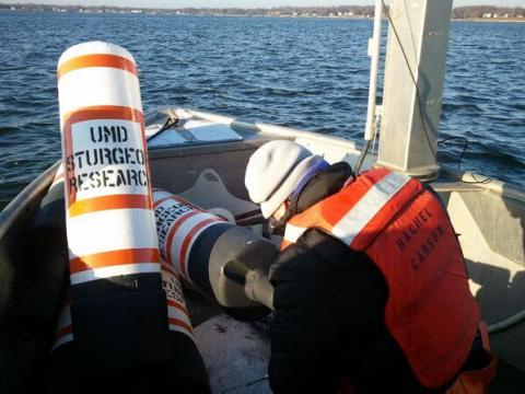 Secor lab deploys sturgeon receivers.