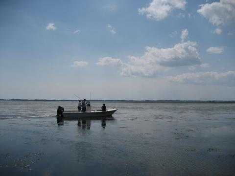 Researchers do fieldwork in the Bay.