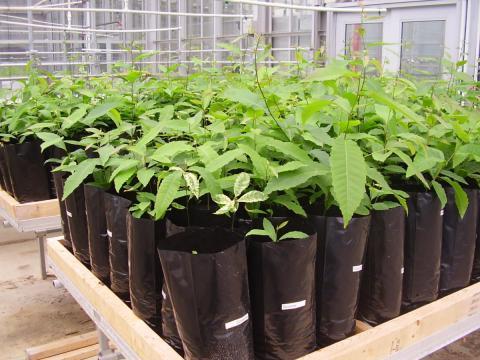 Appalachian Laboratoray's greenhouse