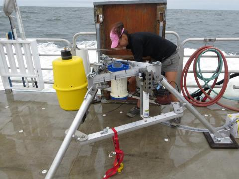 CBL Graduate Research Assistant Lauren Gelesh, Laura Lapham's student, placed several pump-like instruments at the bottom of the Bay to continuously collect water samples before, during, and after waters went hypoxic.
