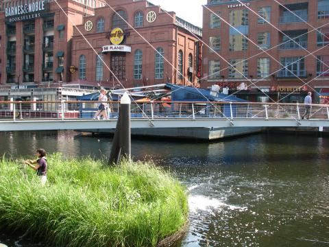 Photo of floating wetlands in Baltimore's Inner Harbor