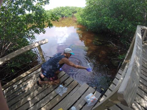 Graduate student Juan Alvarez pulls samples from Laguna Grande, a bioluminescent bay in Puerto Rico.
