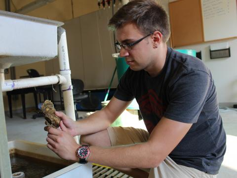 Kevin Kahover holds an oyster to examine.