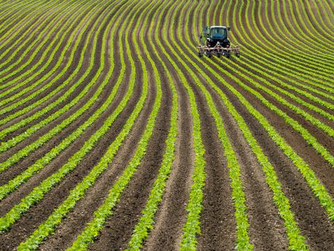 rows of green farm land