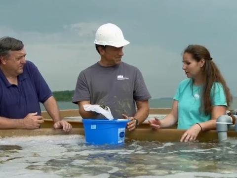 "Mike Rowe visits Mutt Meritt and Stephanie Alexander at Horn Point's oyster hatchery for a segment on his show ""Somebodoy's Gotta Do It."""