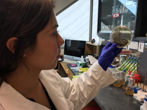 Graduate student Daniela Tizabi holding up a petri dish in the lab