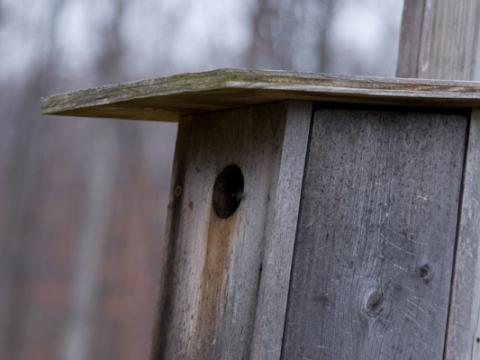 Wooden bird house at the UMCES Appalachian Laboratory