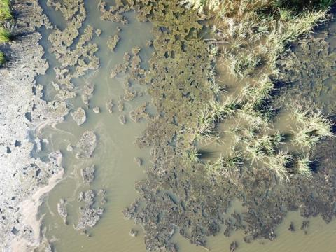 algal bloom in Lake Wateree SC