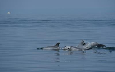 dolphin fins cresting above the water