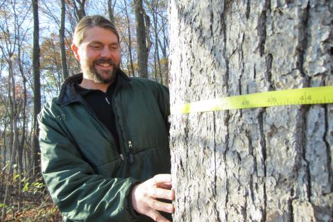 Andrew Elmore measures a tree.