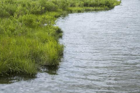 a coastal wetland