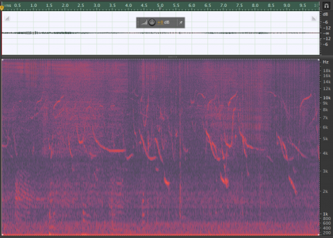 Dolphin clicks and whistles Spectrogram