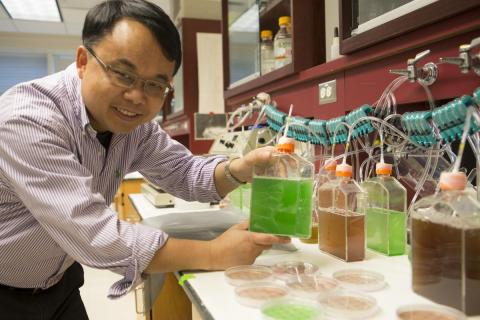 Feng Chen holds algae in his lab.
