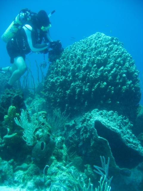 A marine scientist works on a giant barrel sponge. Photo courtesy of Andia Chaves-Fonnegra